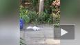Белка-альбинос пришла за орешками и попала на видео