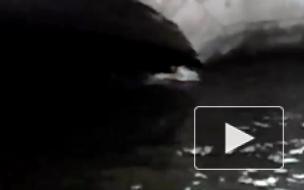 В Петербурге наблюдается аномальная жара: горожане купаются в канале Грибоедова, минуя запреты