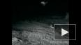 Схватка кенгуровых крыс и змей попала на видео