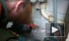 Ради застрявшего голубя в доме на Белградской пришлось ломать стену