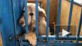Петербуржцы стали чаще брать животных из приютов на кара...