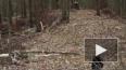 Опубликовано видео с места крушения медицинского вертоле...