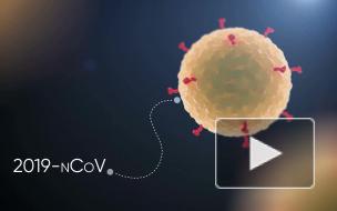 ВПетербурге предложили лечить осложнения от COVID-19 с помощью препарата длярогатого скота