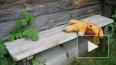 В Нижегородской области пропали шестимесячный ребенок ...