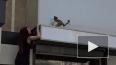 В Воронеже неравнодушные гости кафе сняли кошку с ...