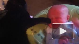 кот убаюкивает ребенка