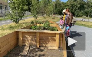 Piter.TV узнал, что выращивают в общественном огороде на набережной Карповки