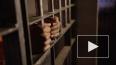 Вена выдала Москве обвиняемого в убийстве 21-летней ...