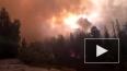 ФСБ: пожары в лесах Европы – это «лесной джихад» «Аль-Ка...