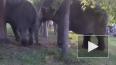 По Челябинску слоны гуляли