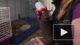 """Видео: в """"Велесе"""" выкармливают зайчат-найдёнышей"""