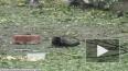Кровавое видео с места взрыва в Донецке появилось в Сети