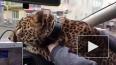 Видео из Екатеринбурга: В такси по городу катался ...