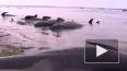 Более 400 китов - пилотов выбросились на берег в Новой З...