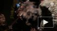 Видео: в Подмосковье нашли тела депутата и ее родных, ...