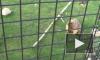 Весны может и не случиться: в Ленинградском зоопарке умер сурок