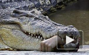 Крокодил-людоед в Петербурге: версии появления хищника в городе и его дальнейшая судьба