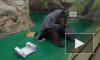 Смешное видео из Новосибирска: обезьяна укуталась в одеяльце, чтобы не замерзнуть