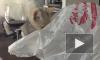 Смешное видео: кот с пакетом на голове устроил забег по дому