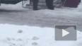 Видео: мужчина покатался верхом на живом медведе в Губки...