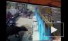 Видео: стадо быков едва не задавило маленького ребенка