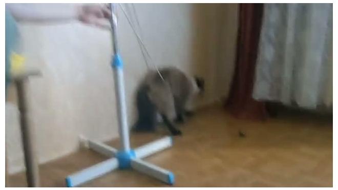 Кот на привязи