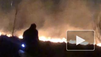 Видео: в Пушкине загорелось поле
