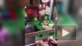 Странное видео из Китая: котят посадили в игровой ...