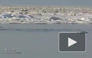 В Крыму во льдах застряли до 100 дельфинов