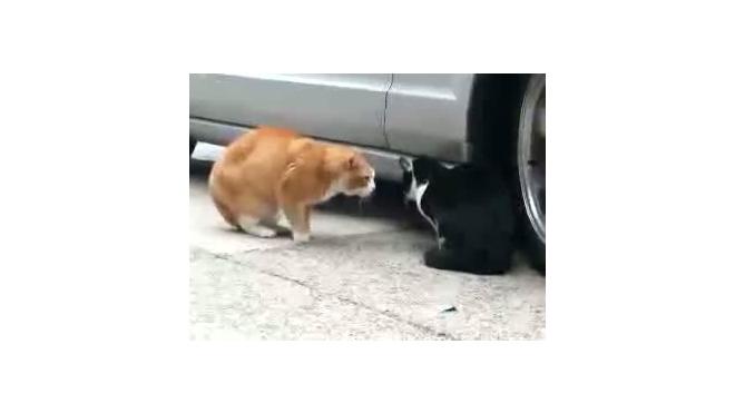 Один кот наехал на другого