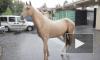 Ленинградскому зоопарку на 150-летие подарили лошадь и сервала