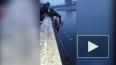 Владикавказ: Чудесное спасение собаки попало на видео