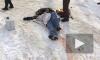 Видео погони со стрельбой в Нижневартовске попало в сеть