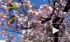 Настоящая весна в Петербурге: в среду воздух прогреется до +15