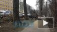 Дерево вырвало с корнем и асфальтом возле Тихорецкого ...