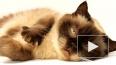 #MrSandmanChallenge: котики, собачки и люди массово ...