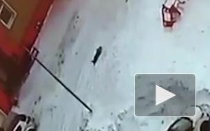 В Новом Уренгое водитель переехал во дворе дома 5-летнего мальчика