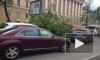 Падающие от ветра деревья раздавили 7 машин и человека в Санкт-Петербурге