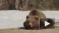 Хит-кино: Медведи, ужасы и первая любовь