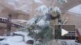 Видео: Панды из Московского зоопарка обрадовались ...