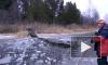 Швеция: Чудесное спасения лося из ледового плена сняли на видео
