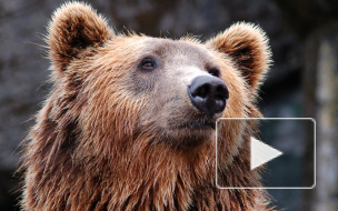 В Приморье задержали контрабандистов с сотнями медвежьих лап