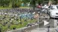 На проспекте Славы голуби оккупировали пешеходную ...
