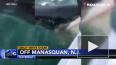 Видео: в США рыбаки едва не поймали пятиметровую белую а...