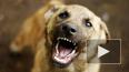 В Ногинске бродячая собака искусала лицо 4-летней ...