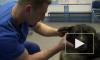 Спецслужбы внедрили секретных агентов в ряды петербургских ветеринаров