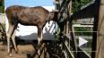 Инструкция от центра Велес: встретили лося - прячьтесь