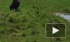 Видео дня: жители Ленобласти стали свидетелями рождения зубренка