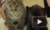 Петербуржцы подарят крохам-ягуарам из Ленинградского зоопарка собачьи игрушки и литровые канистры