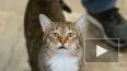 """В США в приюте кота посадили в """"одиночку"""", потому ..."""